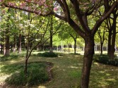 The gardens of Donghua University, photo by Gareth Kershaw.